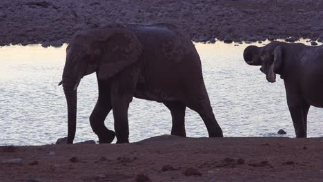 Thirsty-African-elephants-arrive-at-a-watering-hole-at-dusk-in-golden-sunset-light-and-bathe-and-drink-at-Etosha-National-Park-namibia-3