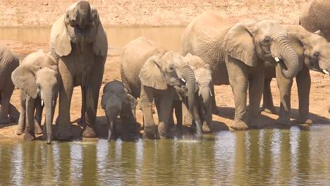 Una-Gran-Manada-De-Elefantes-Africanos-Sedientos-Y-Polvorientos-Llegan-A-Un-Abrevadero-Y-Beben-Y-Juegan-En-Erindi-Park-Namibia-3