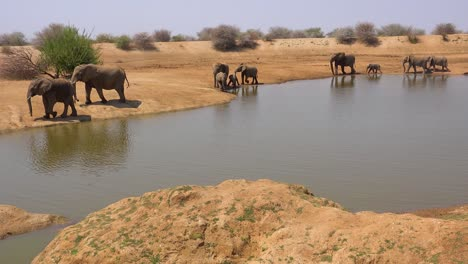 A-large-herd-of-thirsty-and-dusty-African-elephants-arrive-at-a-watering-hole-and-drink-and-play-in-Erindi-Park-Namibia-4