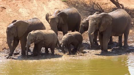 Remarkable-footage-of-a-family-herd-of-African-elephants-enjoying-a-mud-bath-at-a-watering-hole-at-Erindi-Park-Namibia-Africa