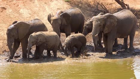Imágenes-Notables-De-Una-Manada-Familiar-De-Elefantes-Africanos-Disfrutando-De-Un-Baño-De-Barro-En-Un-Abrevadero-En-El-Parque-Erindi-Namibia-áfrica