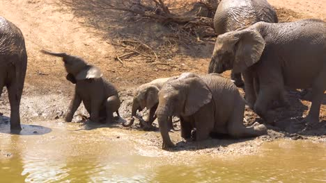 Remarkable-footage-of-a-family-herd-of-African-elephants-enjoying-a-mud-bath-at-a-watering-hole-at-Erindi-Park-Namibia-Africa-4