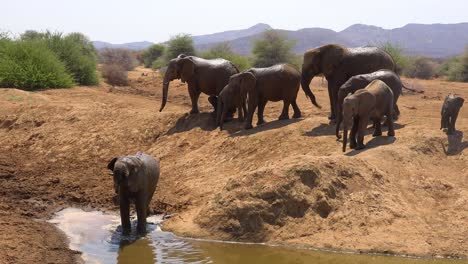A-large-herd-of-thirsty-and-dusty-African-elephants-arrive-at-a-watering-hole-and-drink-and-play-in-Erindi-Park-Namibia-5