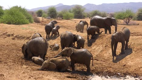 Remarkable-footage-of-a-family-herd-of-African-elephants-enjoying-a-mud-bath-at-a-watering-hole-at-Erindi-Park-Namibia-Africa-5