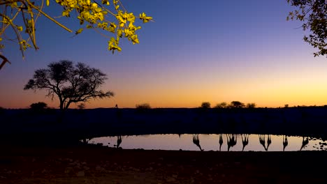 Remarkable-shot-of-giraffes-drinking-reflected-in-a-watering-hole-at-sunset-or-dusk-in-Etosha-National-Park-Namibia-4