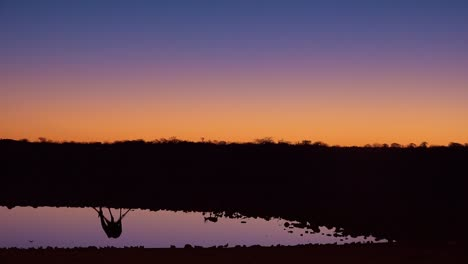 Remarkable-shot-of-a-giraffe-drinking-reflected-in-a-watering-hole-at-sunset-or-dusk-in-Etosha-National-Park-Namibia-1