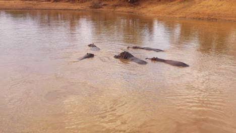 Very-good-aerial-over-a-watering-hole-with-a-group-of-hippos-bathing-in-Erindi-Park-Namibia-Africa-1