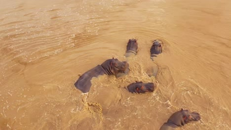 Very-good-aerial-over-a-watering-hole-with-a-group-of-hippos-bathing-in-Erindi-Park-Namibia-Africa-3