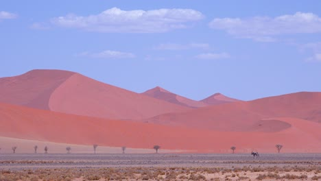 Remarkable-and-slightly-unreal-shot-of-oryx-crossing-Namib-desert-in-Namibia-with-massive-sand-dunes-distant