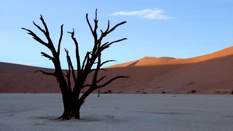 Árboles-Muertos-Siluetas-Al-Amanecer-En-Deadvlei-Y-Sossusvlei-En-Namib-Parque-Nacional-Naukluft-Desierto-De-Namib-Namibia-4