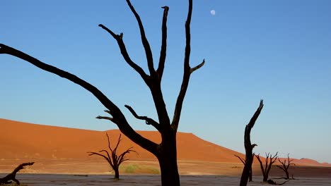 Dead-trees-silhouetted-at-dawn-with-moon-at-Deadvlei-and-Sossusvlei-in-Namib-Naukluft-National-Park-Namib-desert-Namibia-2