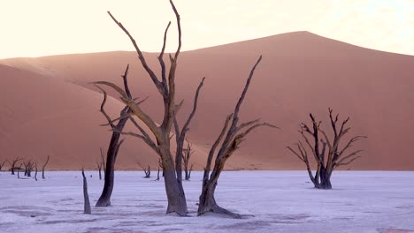 Amazing-dead-trees-silhouetted-at-dawn-at-Deadvlei-and-Sossusvlei-in-Namib-Naukluft-National-Park-Namib-desert-Namibia