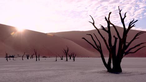 Dead-trees-silhouetted-at-dawn-at-Deadvlei-and-Sossusvlei-in-Namib-Naukluft-National-Park-Namib-desert-Namibia-7