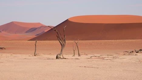 Establishing-shot-of-Namib-Naukluft-National-Park-in-the-Namib-desert-and-massive-sand-dunes-dawn-Namibia-1