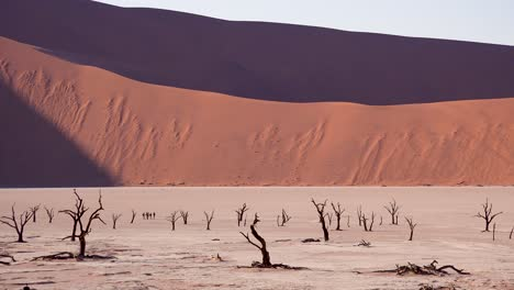 Tourists-walk-near-dead-trees-silhouetted-at-dawn-at-Deadvlei-and-Sossusvlei-in-Namib-Naukluft-National-Park-Namib-desert-Namibia-5