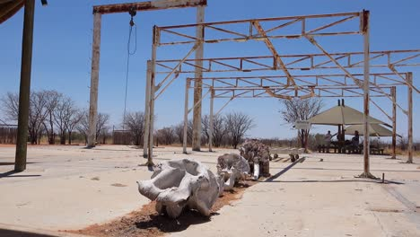 A-dead-elephant-skeleton-sits-at-an-abaondoned-culling-station-in-Etosha-National-Park-namibia-where-elephants-were-once-killed-to-control-overpopulation