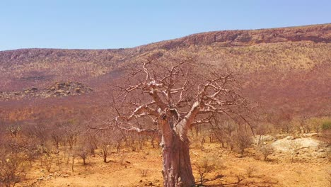 Aerial-around-a-giant-baobab-tree-in-northern-Namibia-or-southern-Angola