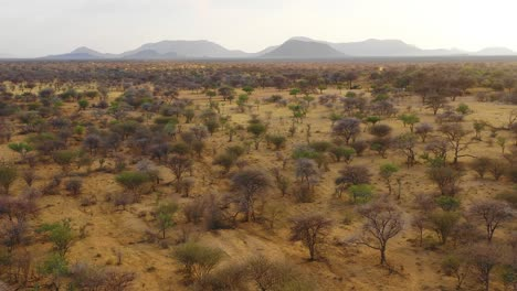 Beautiful-aerial-reveals-the-landscape-plains-acacia-trees-and-savannah-of-Namibia-at-Erindi-Reserve