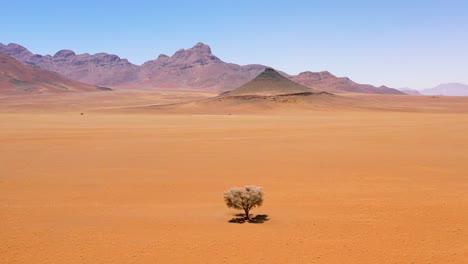 Antena-De-Un-Solo-árbol-Solitario-Sentado-En-Medio-Del-Desierto-De-Namib-Namibia-1
