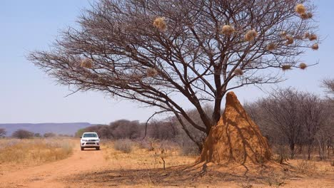 Un-Vehículo-De-Safari-Toyota-Hi-Lux-Pasa-Un-Montículo-De-Termitas-Alto-En-Un-Safari-En-Namibia-1