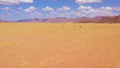 Aerial-over-huge-herds-of-oryx-antelope-wildlife-walking-across-empty-savannah-and-plains-of-Africa-near-the-Namib-Desert-Namibia