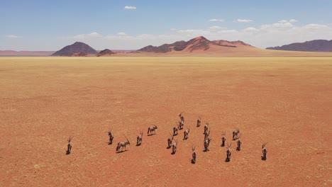 Aerial-over-herd-of-oryx-antelope-wildlife-walking-across-dry-empty-savannah-and-plains-of-Africa-near-the-Namib-Desert-Namibia-2