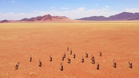 Aerial-over-herd-of-oryx-antelope-wildlife-walking-across-dry-empty-savannah-and-plains-of-Africa-near-the-Namib-Desert-Namibia-3
