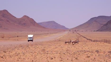 Oryx-antelopes-run-across-a-road-in-the-Namib-Desert-Namibia