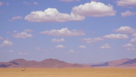 A-lonely-solo-oryx-antelope-walks-across-the-Namib-Desert-in-Namibia-1
