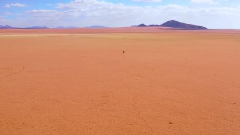 Antena-Como-Un-Avestruz-Muy-Solitario-Camina-Sobre-Las-Llanuras-De-África-En-El-Desierto-De-Namib-Namibia