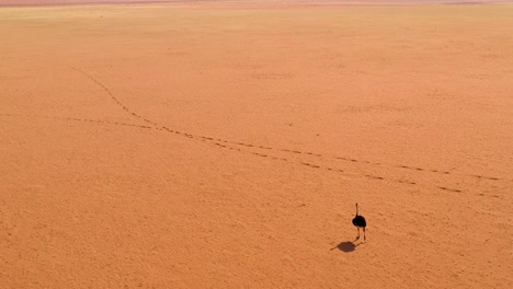 Antena-Como-Un-Avestruz-Muy-Solitario-Camina-Sobre-Las-Llanuras-De-África-En-El-Desierto-De-Namib-Namibia-4
