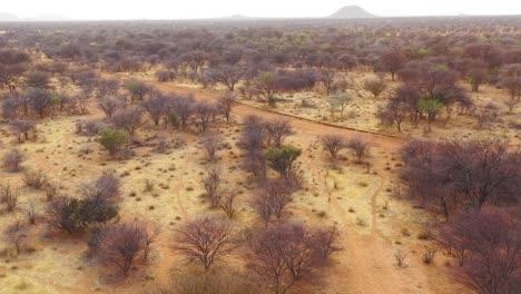 Buena-Antena-De-Antílope-Gacela-Springbok-Corriendo-Por-La-Sabana-Africana-En-Namibia