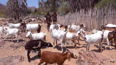 Two-Himba-tribal-women-in-full-costume-herd-goats-through-a-village-in-Namibia