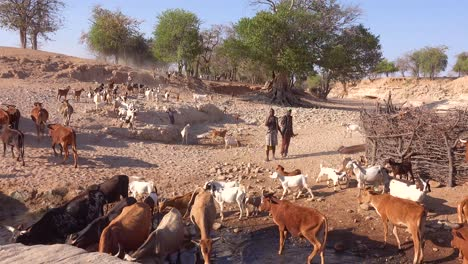 Two-African-shepherds-herd-hundreds-of-goats-to-a-watering-hole-in-rural-Africa-Namibia-Damaraland