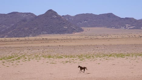 Wild-and-endangered-horse-runs-across-the-Namib-Desert-in-Namibia-Africa