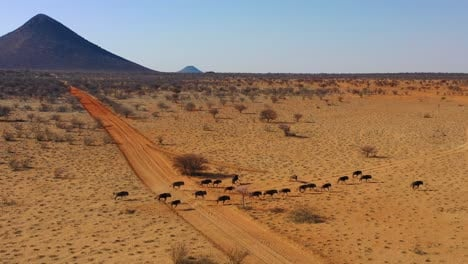 Excellent-drone-aerial-of-black-wildebeest-running-on-the-plains-of-Africa-Namib-desert-Namibia