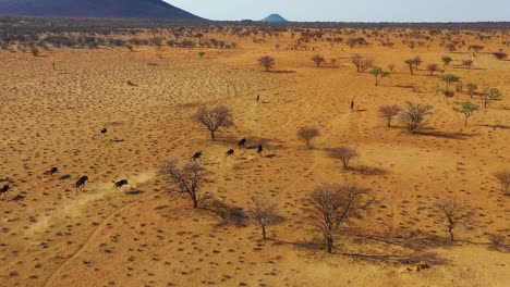 Excellent-drone-aerial-of-black-wildebeest-running-on-the-plains-of-Africa-Namib-desert-Namibia-1