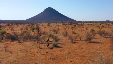 Excelente-Antena-De-Drone-De-ñu-Negro-Corriendo-En-Las-Llanuras-De-África-Desierto-De-Namib-Namibia-2