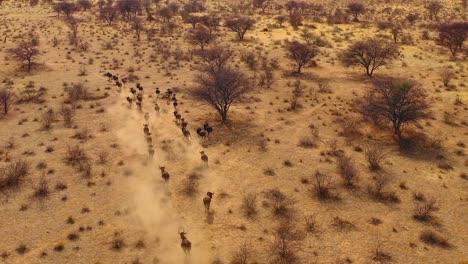 Excelente-Antena-Drone-De-ñu-Negro-Corriendo-En-Las-Llanuras-De-África-Desierto-De-Namib-Namibia-6
