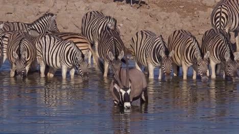 Las-Cebras-Y-Oryx-Beben-De-Un-Abrevadero-En-El-Parque-Nacional-De-Etosha-Namibia-África