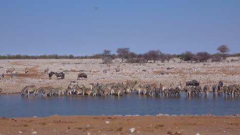 Zebras-and-wildebeest-drink-from-a-watering-hole-at-Etosha-National-Park-Namibia-Africa