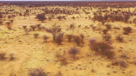 Excellent-wildlife-aerial-of-zebras-running-on-the-plains-of-Africa-Erindi-Park-Namibia-2