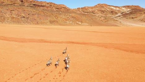 Ausgezeichnete-Wild-Lebende-Luftaufnahmen-Von-Zebras-Die-In-Der-Namib-wüste-Von-Afrika-Namibia-Laufen