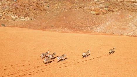 Excelente-Antena-De-Vida-Silvestre-De-Cebras-Corriendo-En-El-Desierto-De-Namib-En-África-Namibia-1