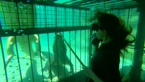 A-woman-cage-diver-feeds-raw-meat-on-a-stick-to-Zambezi-Río-crocodiles-in-Zimbabwe-Africa