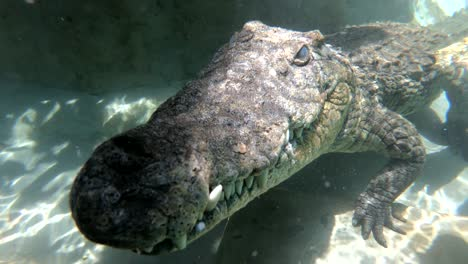 Zambezi-Río-crocodiles-crawl-on-top-of-a-cage-dive-in-Zimbabwe-Africa-1