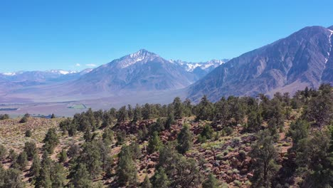 Aerial-over-pine-trees-to-reveal-the-Owens-Valley-and-the-Eastern-Sierra-Nevada-mountains-of-California