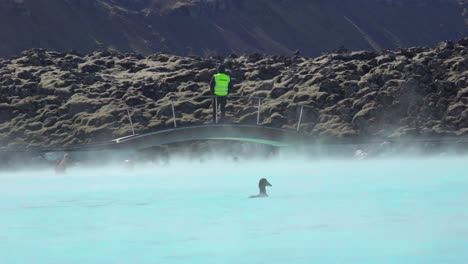A-duck-swims-in-the-famous-Blue-Lagoon-geothermal-hot-water-spa-and-bath-in-Grindavik-Iceland
