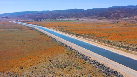 Aerial-of-the-California-aqueduct-surrounded-by-fields-of-wildflowers-and-poppy-flowers-Mojave-Desert-3