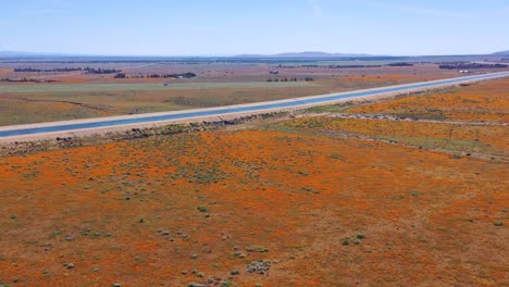 Aerial-of-the-California-aqueduct-surrounded-by-fields-of-wildflowers-and-poppy-flowers-Mojave-Desert-4